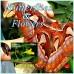 Fauna Butterflies and Flowers