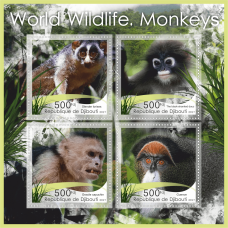 Fauna Monkeys