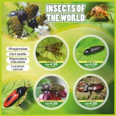 Fauna Insects of the world