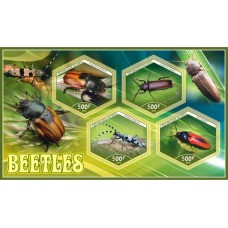 Fauna Beetles