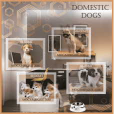 Fauna Domestic dogs