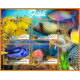 Fish and marine fauna